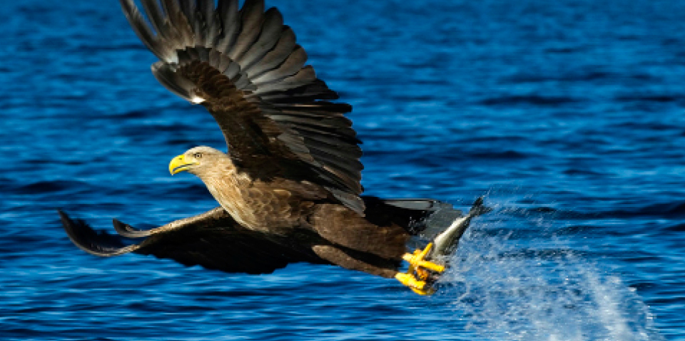 Meet the Eagle - the King of Birds!