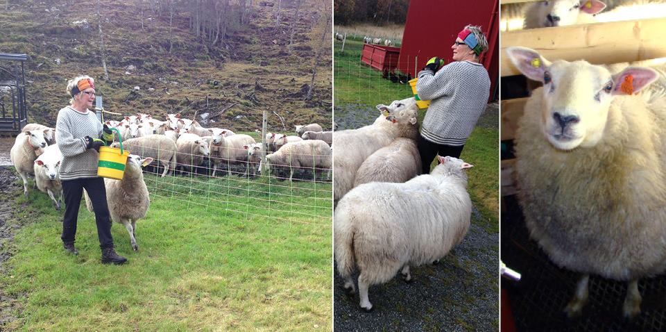 Else's sheep