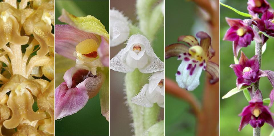 Amazing Orchids in Sunndalslia