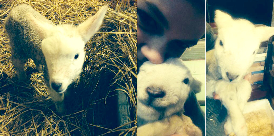 Jumpstarting Lambs